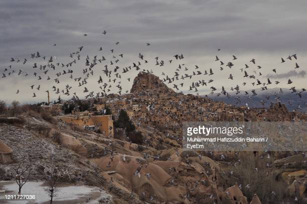 thousand of pigeon flying over the pigeon valley in cappadocia, turkey. - ネヴシェヒル県 ストックフォトと画像