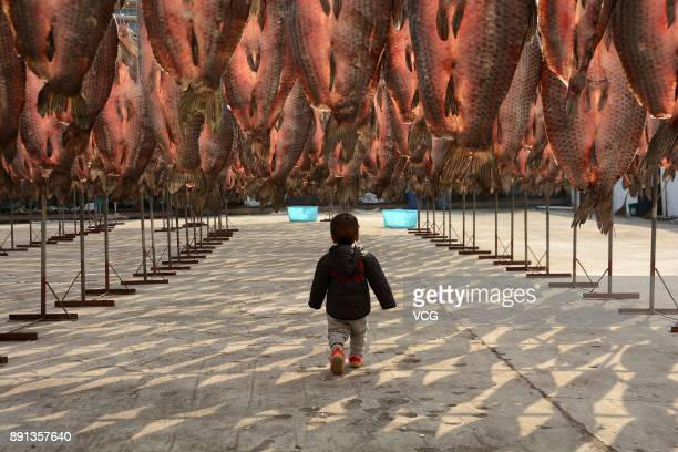 Thousands of cured fish is dried in the sun at an aquatic product factory on December 12 2017 in Hangzhou Zhejiang Province of China