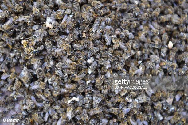 Thousands of dead bees lay on the ground during a protest against the takeover by German chemicals giant Bayer of US giant Monsanto in front of the...