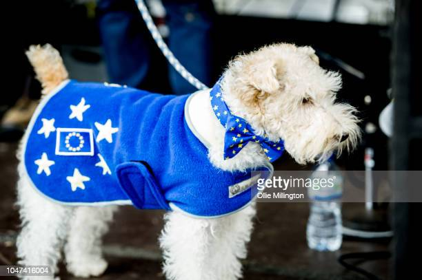 Thousands of dog owners and their dogs march through central London to Parliament on an AntiBrexit march named the Wooferendum to deliver a petition...