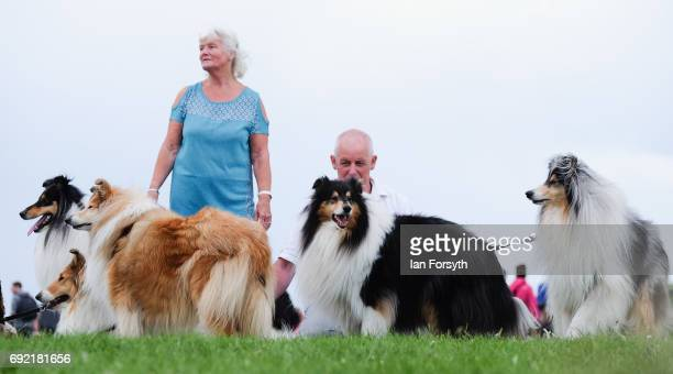 Thousands of excited participants and their owners prepare to take part in the Great North Dog Walk on June 4, 2017 in South Shields, England....