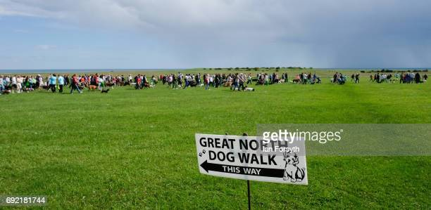 Thousands of excited participants and their owners take part in the Great North Dog Walk on June 4, 2017 in South Shields, England. Founded in 1990...