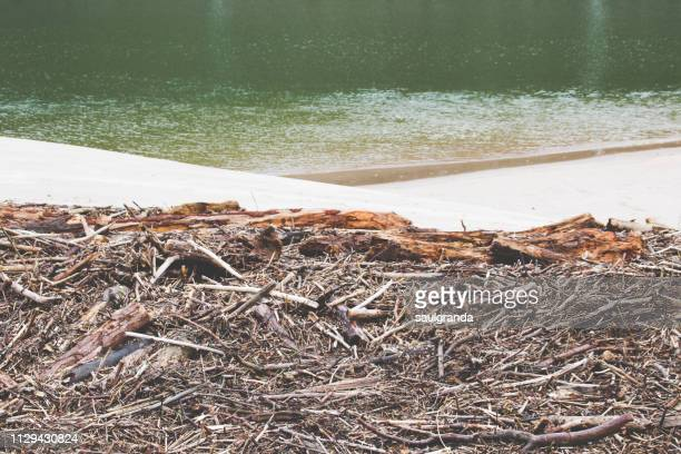 thousands of logs stacked on the beach after the storm. - calm before the storm stock pictures, royalty-free photos & images