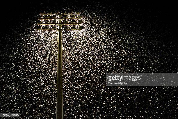 Thousands of moths swarm around flood lights at the Newcastle United Jets home game at Energy Australia Stadium in Newcastle 1 October 2005 NCH NEWS...