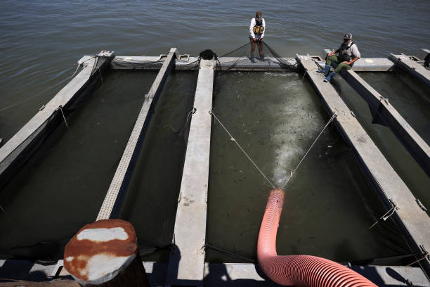 CA: Hatchery Assists Salmon Release Into Waterways Due To Drought