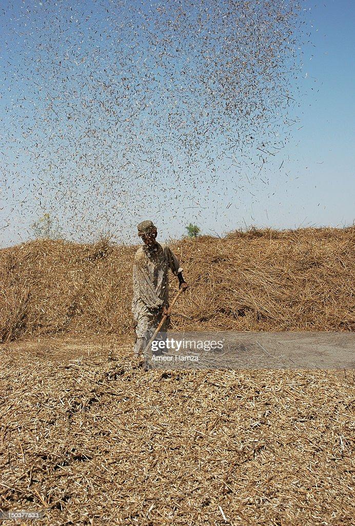 thrashing balochistan stock photo getty images