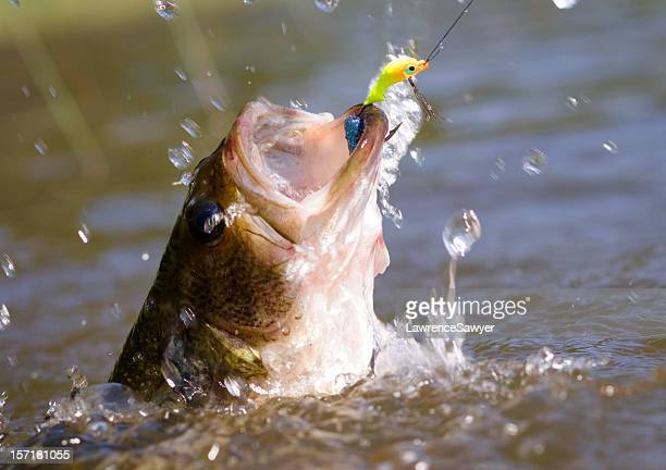 thrashing bass hooked on a jig - fishing hook stock pictures, royalty-free photos & images