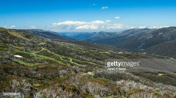 thredbo in summer - janet scott stock pictures, royalty-free photos & images