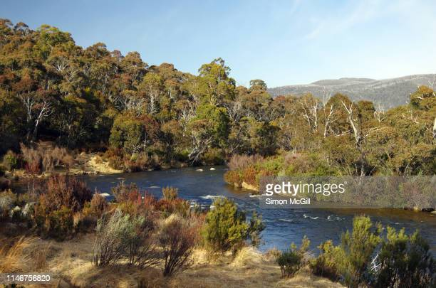 thredbo river, kosciuszko national park, snowy mountains, new south wales, australia - national park stock pictures, royalty-free photos & images