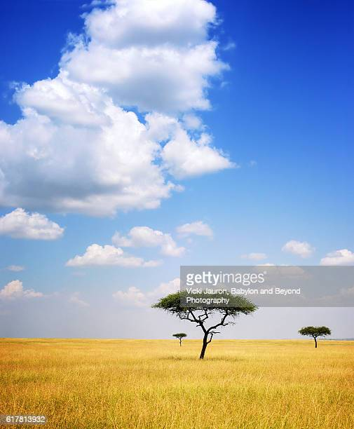 Three Acacia Trees Landscape in Serengeti, Tanzania