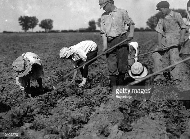 Three adults and six children from seven years to twelve years hard at work on a sugar beet farm near Greeley CO 1915 The father said 'The children...