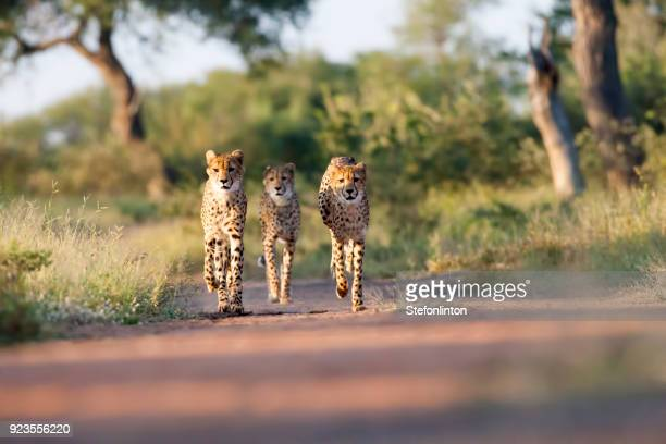 three amigos - south africa stock pictures, royalty-free photos & images