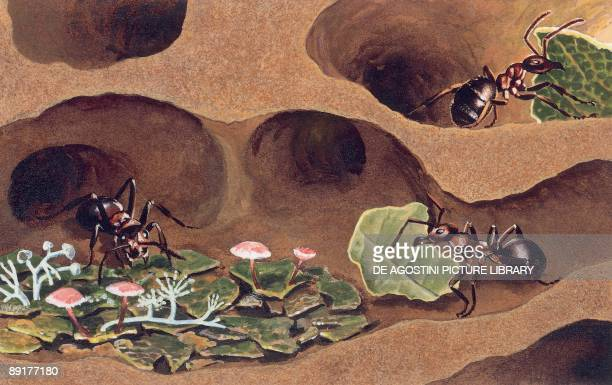 Three ants in an anthill