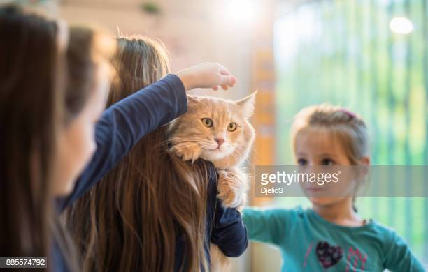 three beautiful girls and their maine coon cat on the visit to the veterinarian. - animal shelter stock pictures, royalty-free photos & images