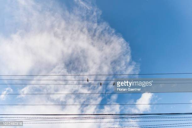 Three birds are pictured on a power line on July 16 2018 in Porumbenii Mari Romania