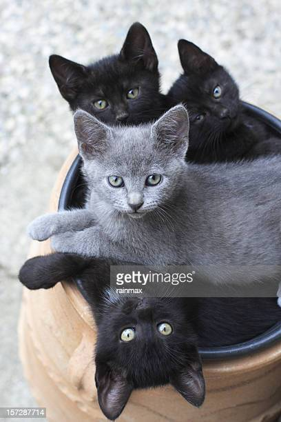 Three black cat and one gray cat all in a barrel