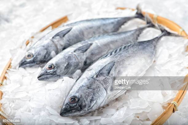 three bonito tuna fish - fresh seafood stock photos and pictures