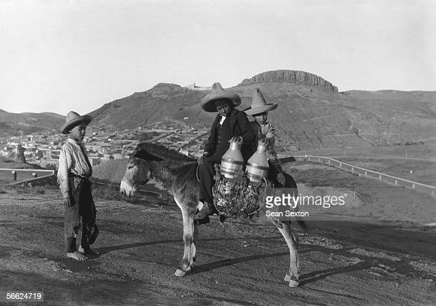Three boys delivering milk churns on a donkey in Mexico circa 1910