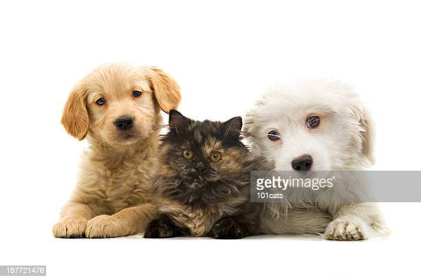 three buddies - cat and dog stock pictures, royalty-free photos & images
