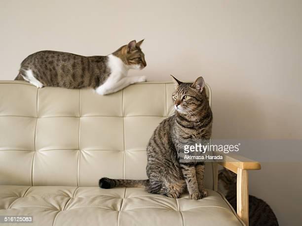 Three cats around couch