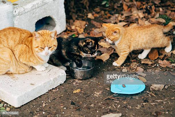 Three cats sitting, a black one playing with water bowl, a brown cat watching black one