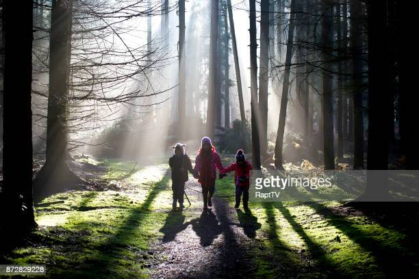 three children holding hands walking through a sunny cold winter forest. - cold temperature stock pictures, royalty-free photos & images