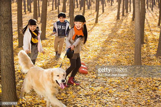 Three children playing with dog in autumn woods
