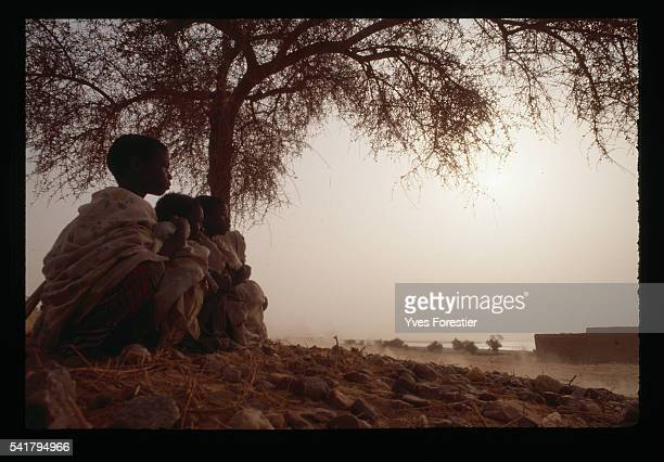 Three children sit next to a tree in the desert watching the track used by competitors of the 1990 ParisDakar Rally NiameyGao leg   Location between...