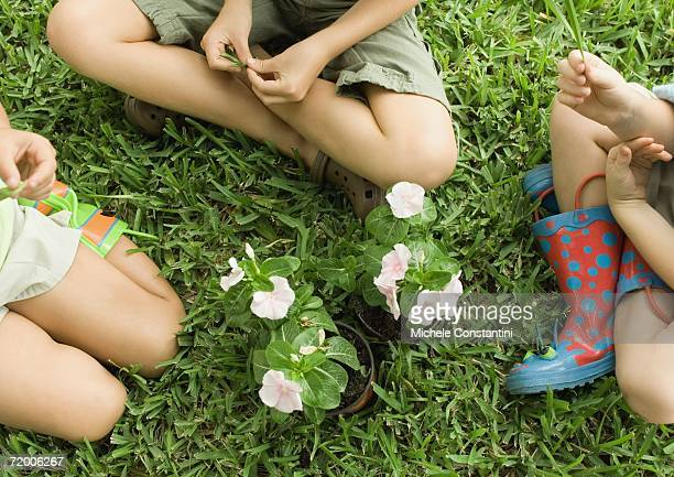 three children sitting around flowers, on grass - children only stock pictures, royalty-free photos & images