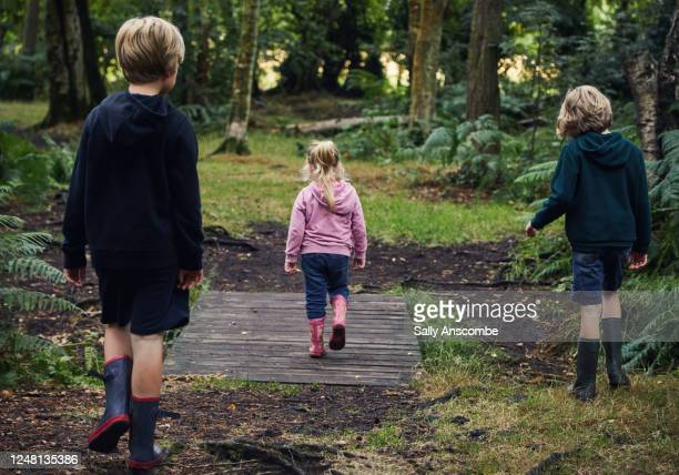 three children walking through the woods together - forest stock pictures, royalty-free photos & images