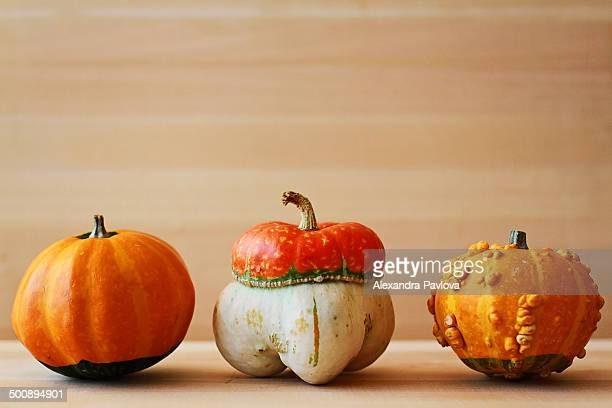 three colorful little pumpkins - alexandra pavlova stock pictures, royalty-free photos & images