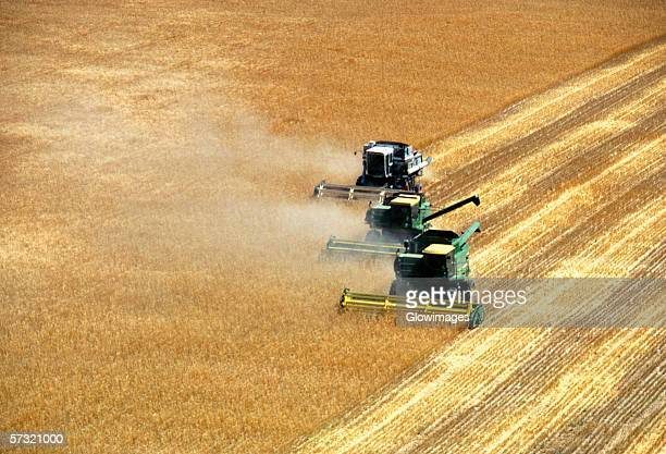 Three combines harvesting wheat in Burlington