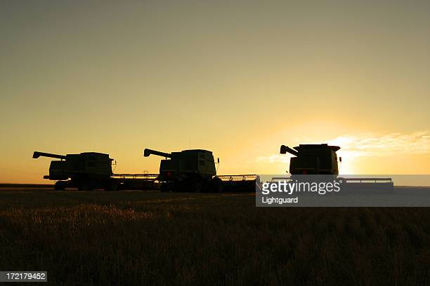 Three combines silhouetted at twilight in prairie field