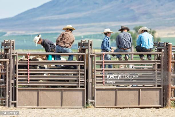 Three Cowboys Chat While Another Cowboy Mounts a Bull at a Rodeo