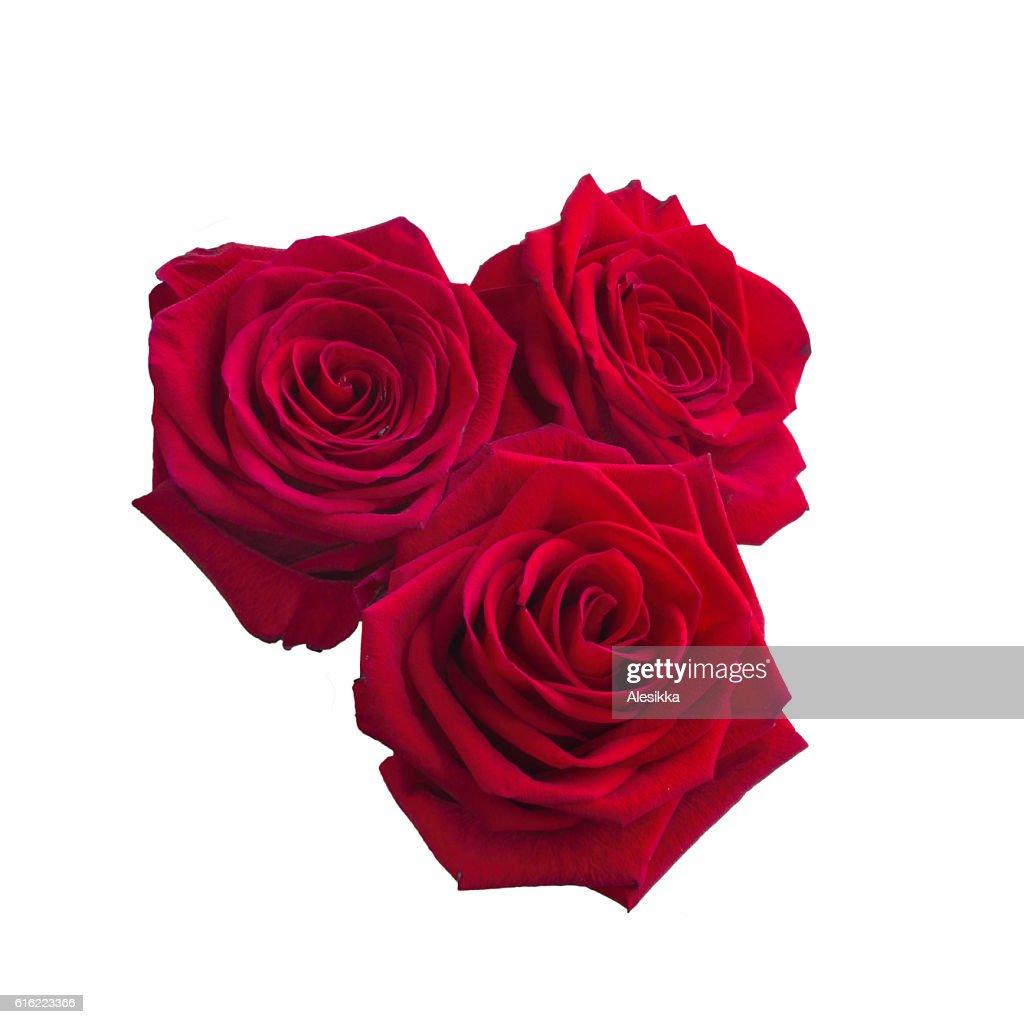 Three Dark red roses : Stock Photo