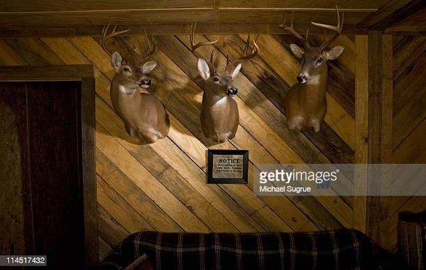 three dear head mounted on a wooden wall in a den. - preserved stock pictures, royalty-free photos & images