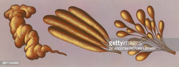Three different types of spinneret the organ for secreting silk in a spider drawing