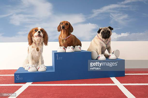three dogs on winners podium - winners podium stock pictures, royalty-free photos & images