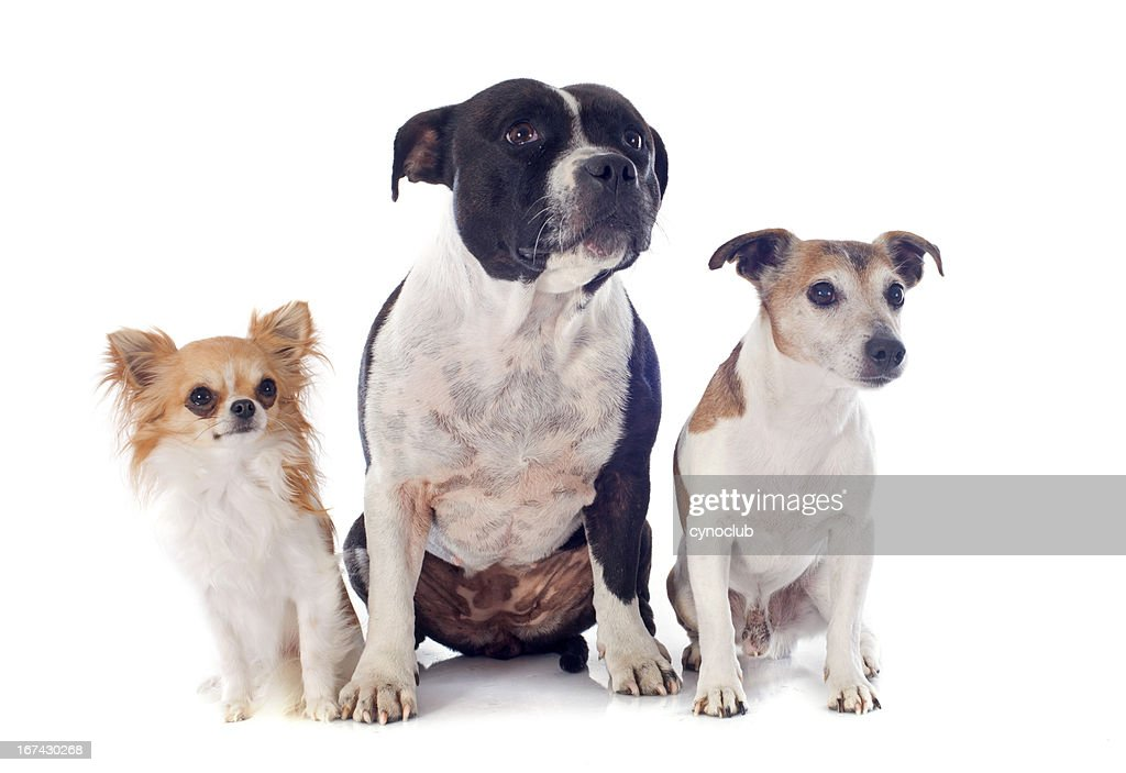 Tres perros : Foto de stock