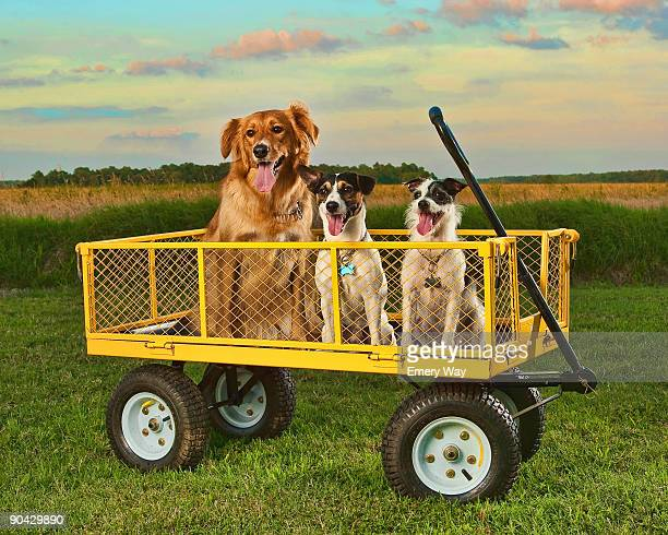 three dogs - three animals stock pictures, royalty-free photos & images