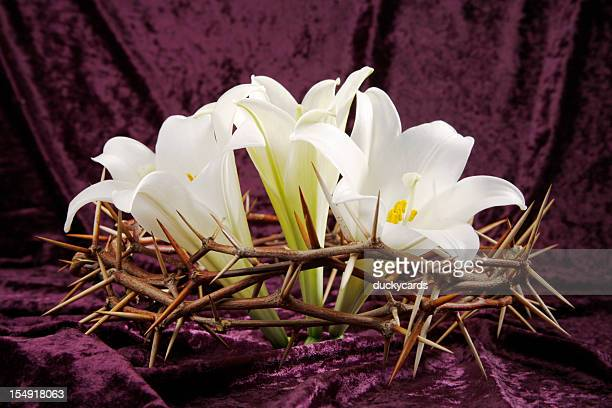 three easter lilies in crown of thorns - easter lily stock pictures, royalty-free photos & images