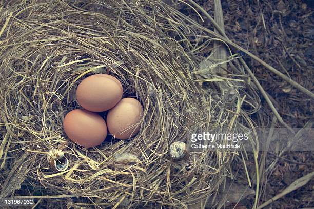 three eggs in bird nest - catherine macbride 個照片及圖片檔
