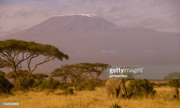 Three elephants at the foot of Mount Kilimanjaro, Tanzania