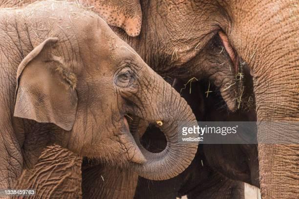 three elephants feeding - herbivorous stock pictures, royalty-free photos & images