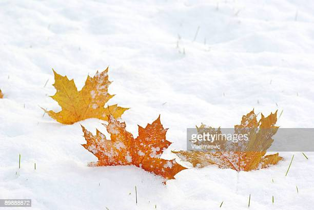 Three fallen leaves on a snowy textured surface