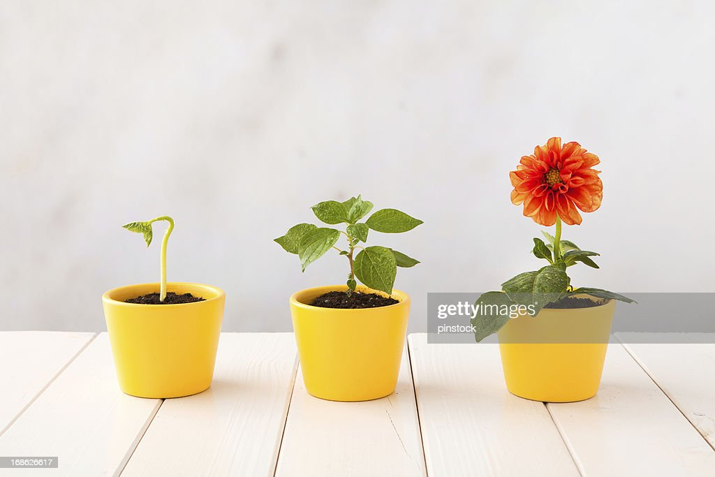 Flower pot stock photos and pictures getty images three flower pots representing three stages of growth mightylinksfo