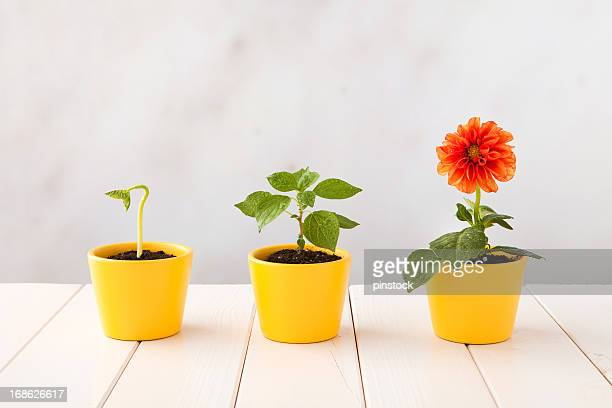 Three flower pots representing three stages of growth