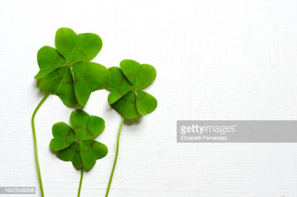 three four-leaf clovers - st patricks stock pictures, royalty-free photos & images
