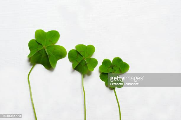 Three four-leaf clovers