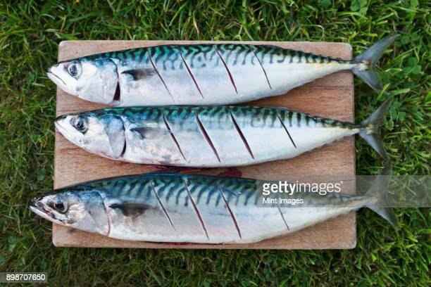 three fresh mackerel fish on the slab being prepared for cooking. - mackerel stock pictures, royalty-free photos & images